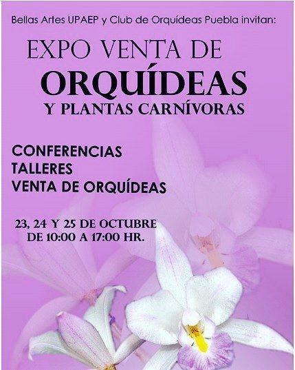 Expo Ventas de Orquídeas