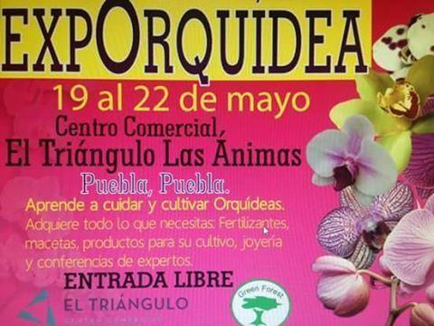 ExpoOrquidea